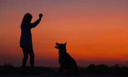 5 Ways That Having a Pet Benefits Your Mental Health