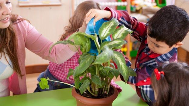 Teacher's Day Plants For Best Classroom Environment
